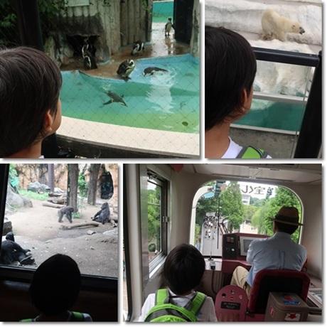 Ueno Zoo 2017-2