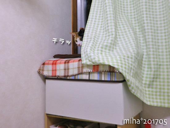 miha17-05-142.jpg