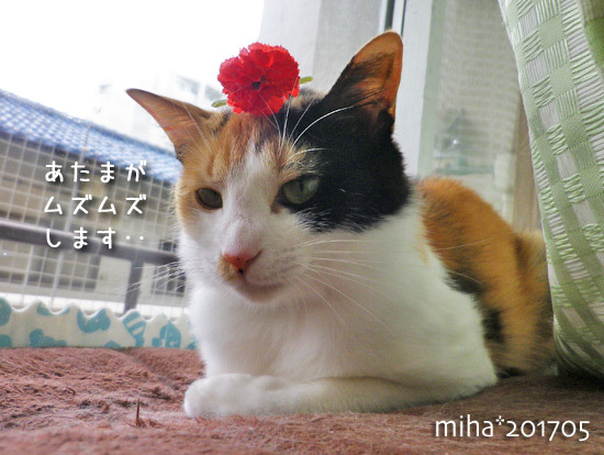 miha17-05-94.jpg