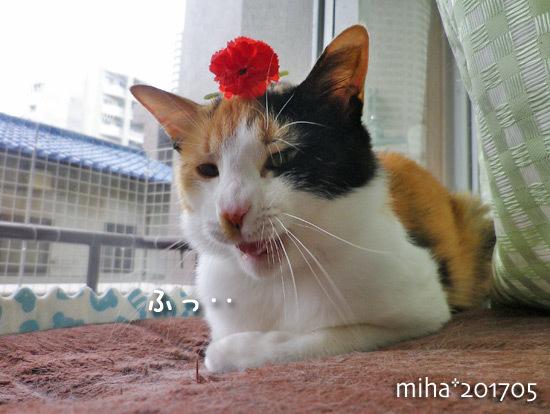 miha17-05-95.jpg