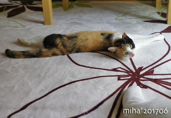 miha17-06-37.jpg