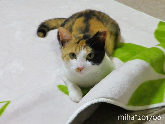 miha17-06-92.jpg