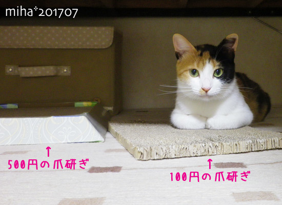 miha17-07-137.jpg