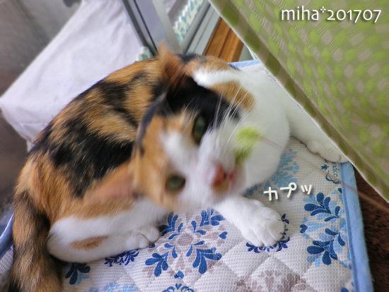 miha17-07-42.jpg