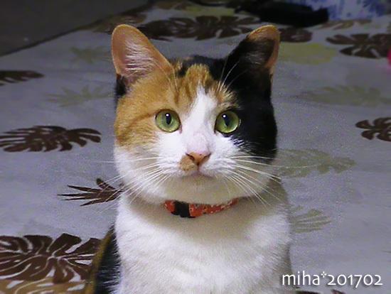 miha17-08-127x.jpg