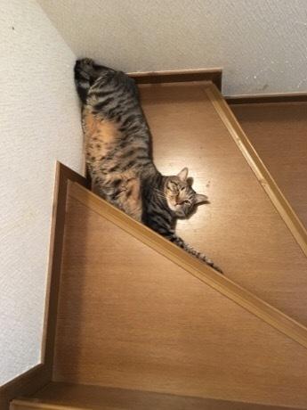 お兄ちゃん階段