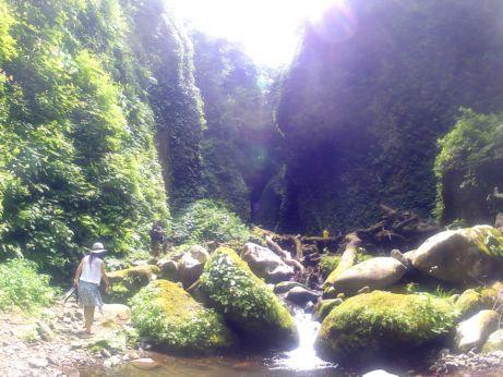 シワガラの滝道中7