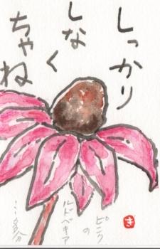 ピンクのルドベキア