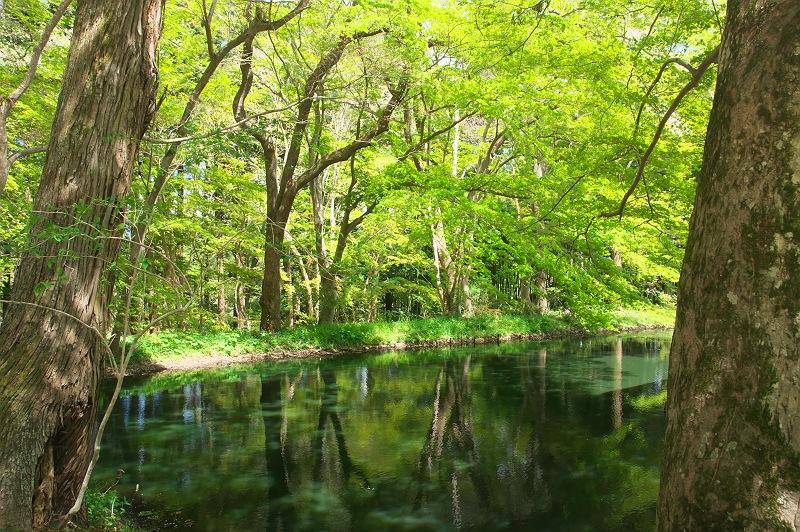 中尊寺 五  ~新緑と水辺の風景~