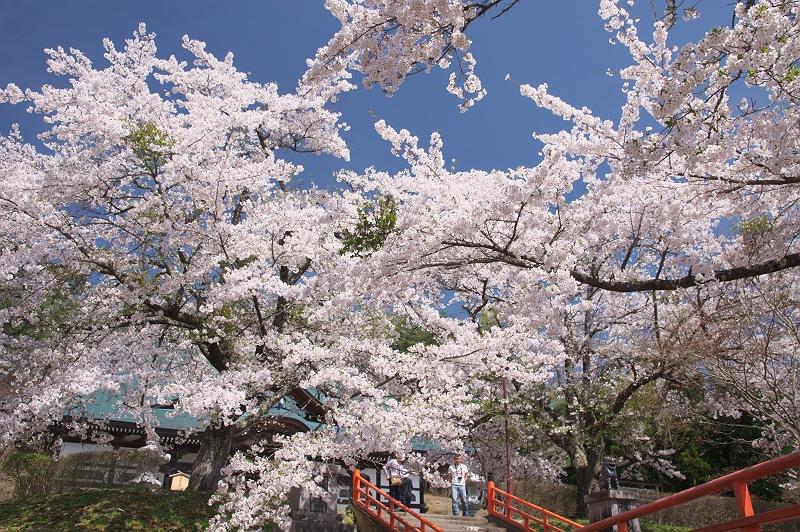 福泉寺に訪れる春 二