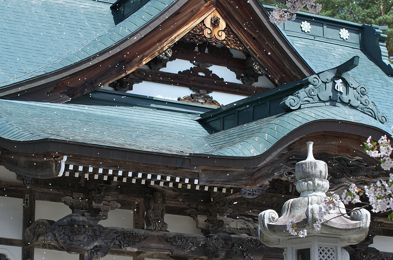 福泉寺に訪れる春 三 ~桜舞う~