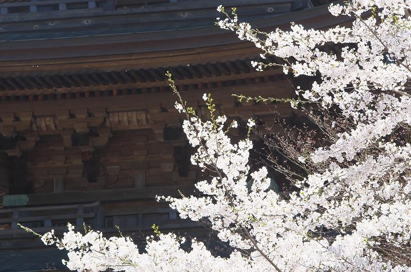 福泉寺に訪れる春 五