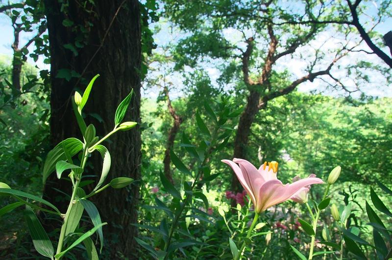ゆりの園 4