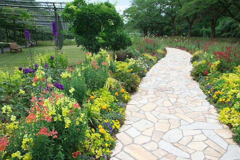 花菖蒲と紫陽花の季節