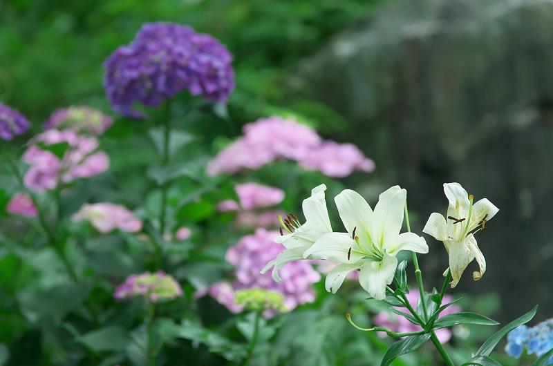 初夏の花たち