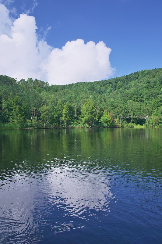 夏の木戸池
