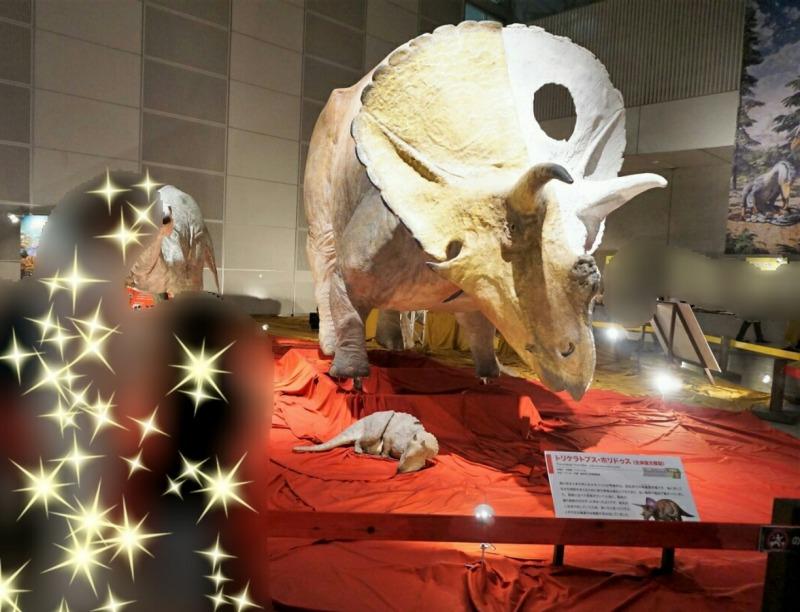 ギガ恐竜展トリケラトプス