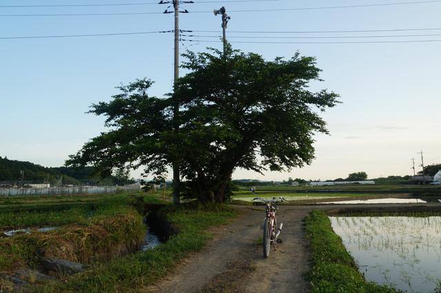 田周りの途中