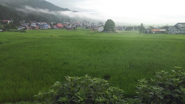「世界一うまい米」が採れた田んぼ