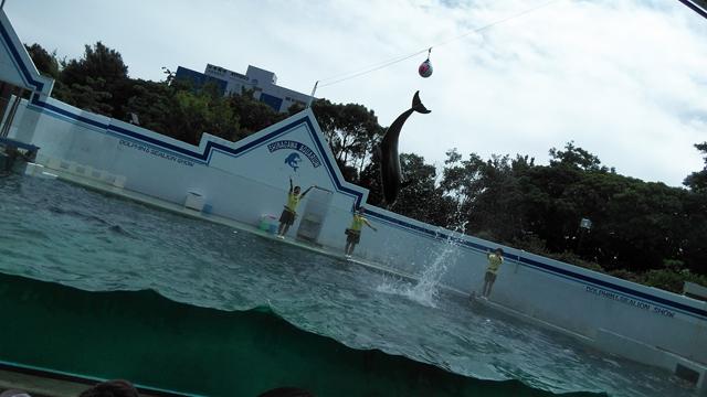 イルカが飛ぶ