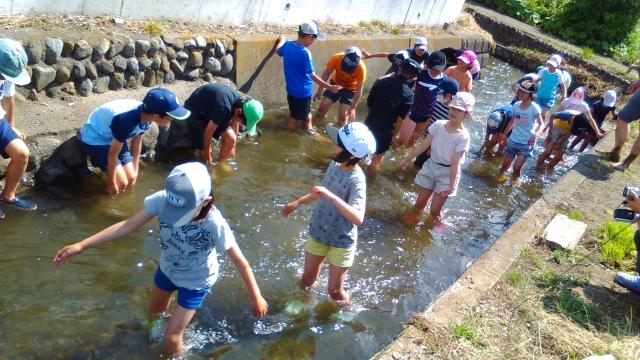 上田用水[宮・上田・万願寺用水]で足を洗う子供達