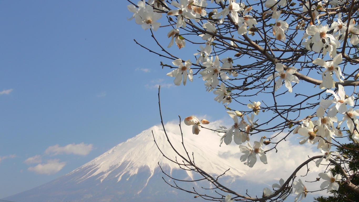 090327富士西公園006