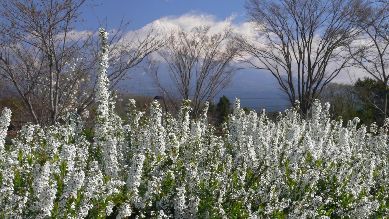 090327富士西公園009