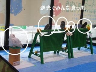 0811ifukurou1.jpg