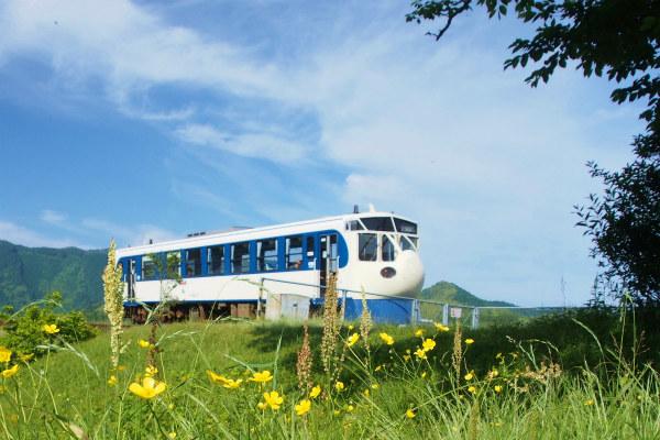 ウマノアシガタと新幹線