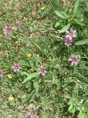 KIMG0751紫庭せきしょう