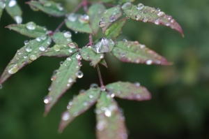 雨の日の花2