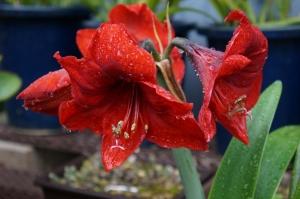 雨の日の花4