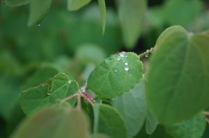雨の日の花5