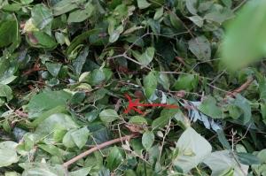 切り枝とヤモリ21