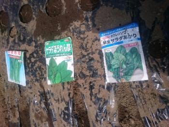 20170830秋野菜種蒔き