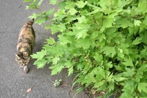 May Cat(s) Tokyo