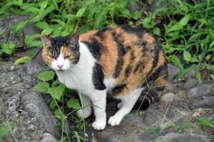 Kay The Cat