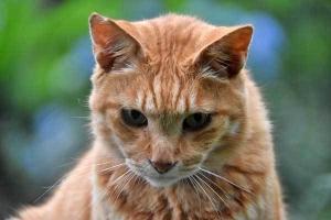Chappy The Cat