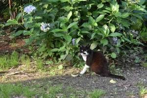 Boko The Cat