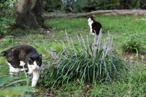 Cat Duo Tak and Chyi