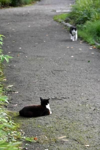 Cat Duo Chyi and Tak