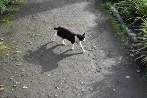 Chyi The Cat