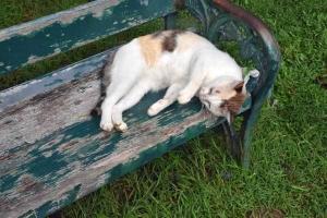 Park Cat, Bangkok Thailand