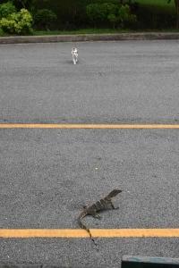 Juvenile Monitor Lizard