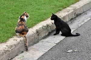 Park Cats, Bangkok Thailand
