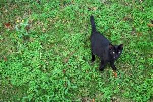 Mama The Cat