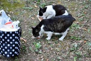 Cats Tak and Deko