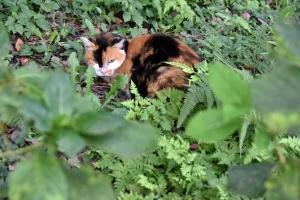 Aki The Cat
