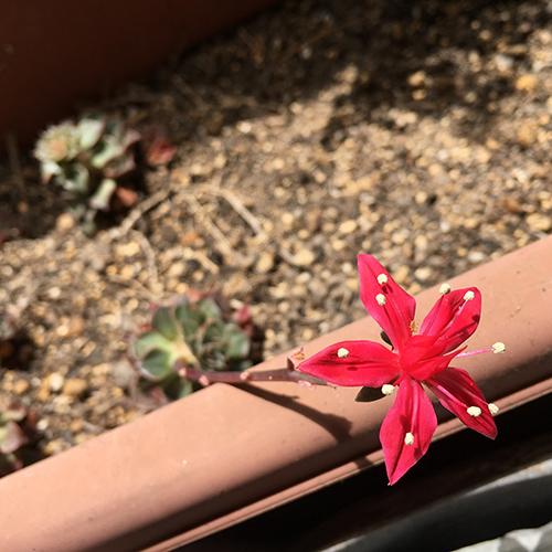始めて見た赤い花