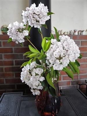 20170524お花